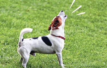 Suns rej - kā to atrisināt 2
