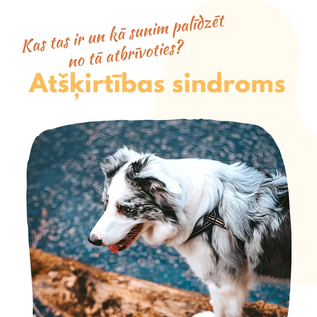 Atšķirtības sindroms sunim