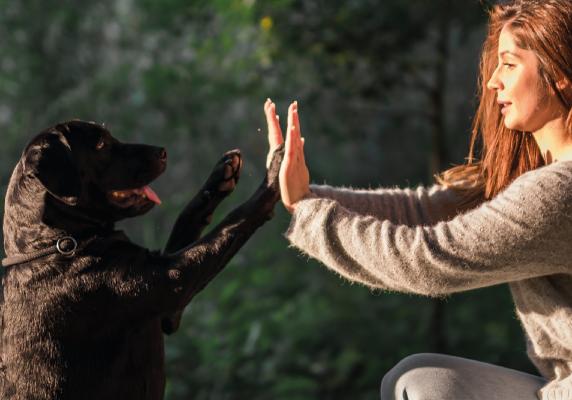 Suņu apmācības nodarbības rīgā