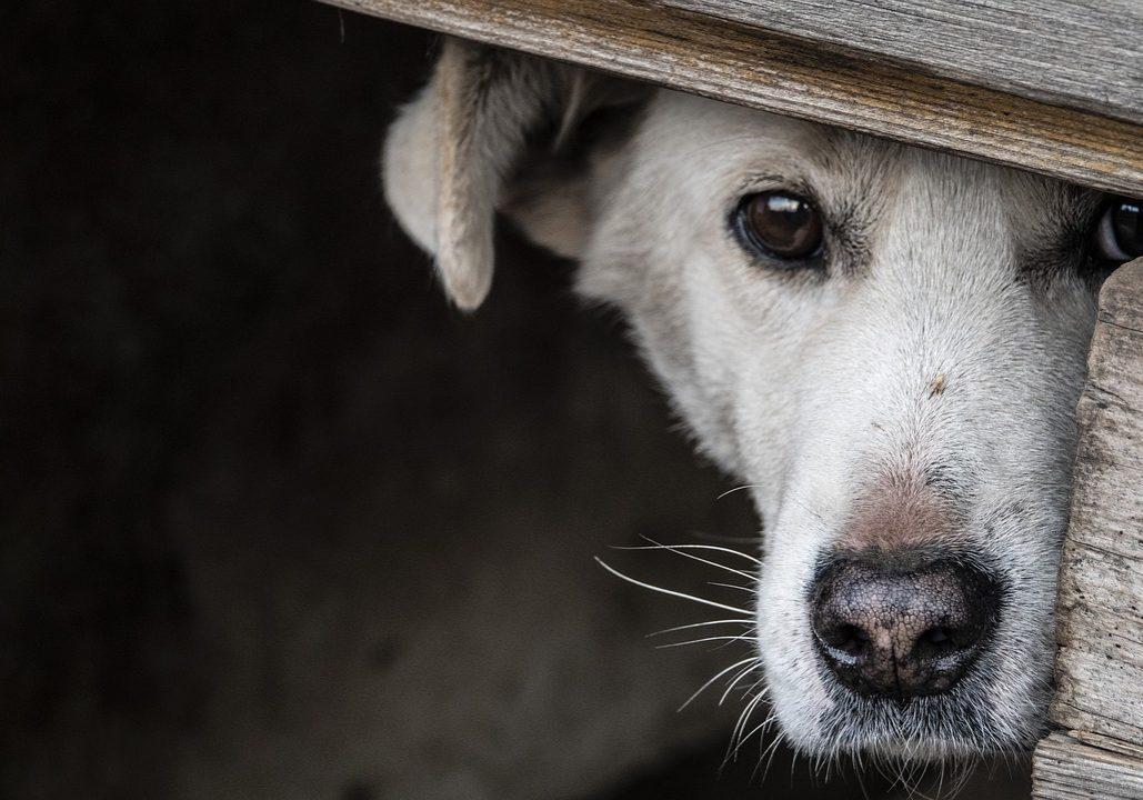 dog-3855224_1280