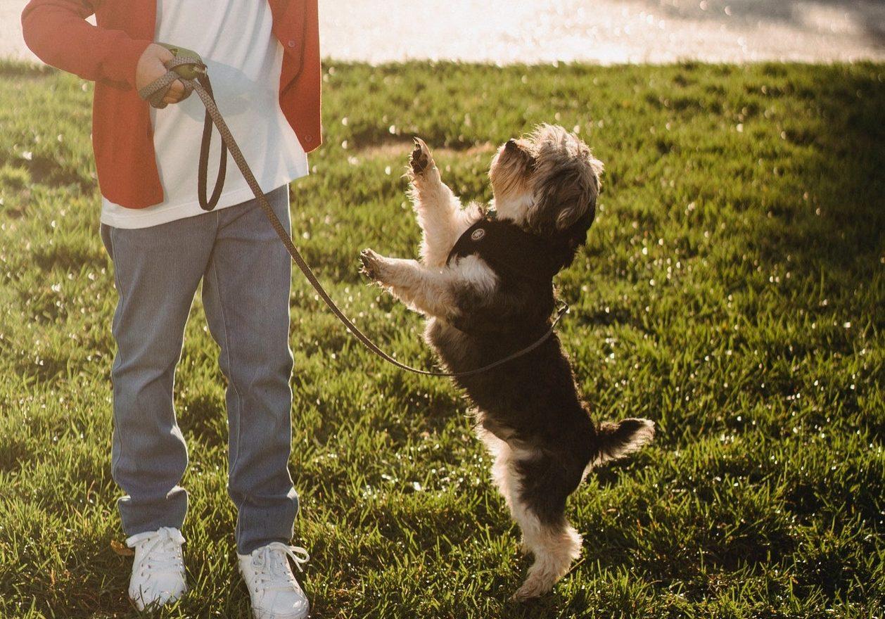 suns lec virsū cilvēkam